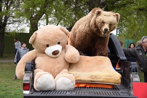 Medve Matekverseny